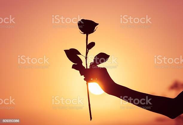 The perfect rose picture id509350386?b=1&k=6&m=509350386&s=612x612&h= zf42jhzdwxjqdx87pp o0dt x0zzeckzdewkmelxtk=