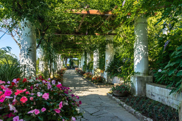 The pergola full of flowers at the gardens of Villa San Michele in Capri, built by Swedish physician Axel Munthe, Italy stock photo