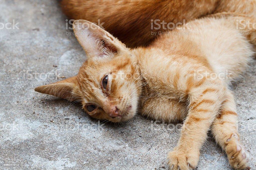 The Pet, Young orange cat sleeping royalty-free stock photo