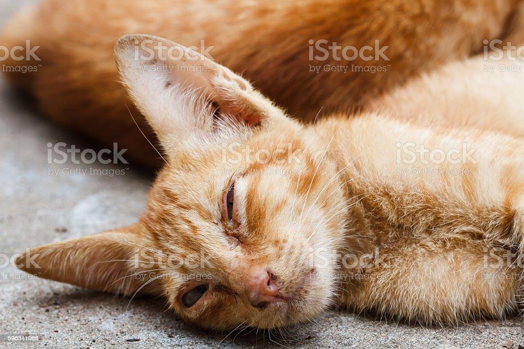 The Pet, Young orange cat sleeping Lizenzfreies stock-foto