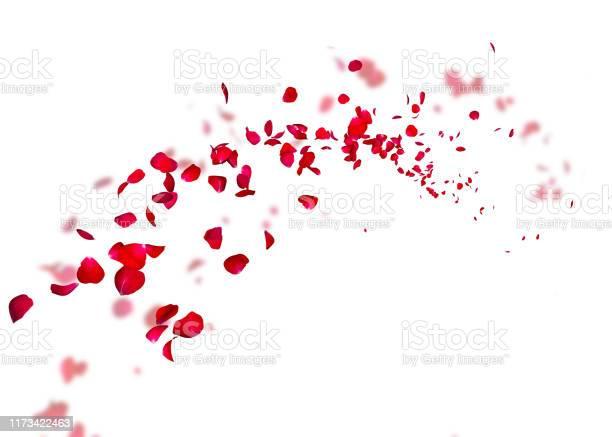 The petals of a dark red rose fly far into the distance picture id1173422463?b=1&k=6&m=1173422463&s=612x612&h=ii8 v4m627zofuai7v8q4woxg6kbkf6iav11ffsbad0=