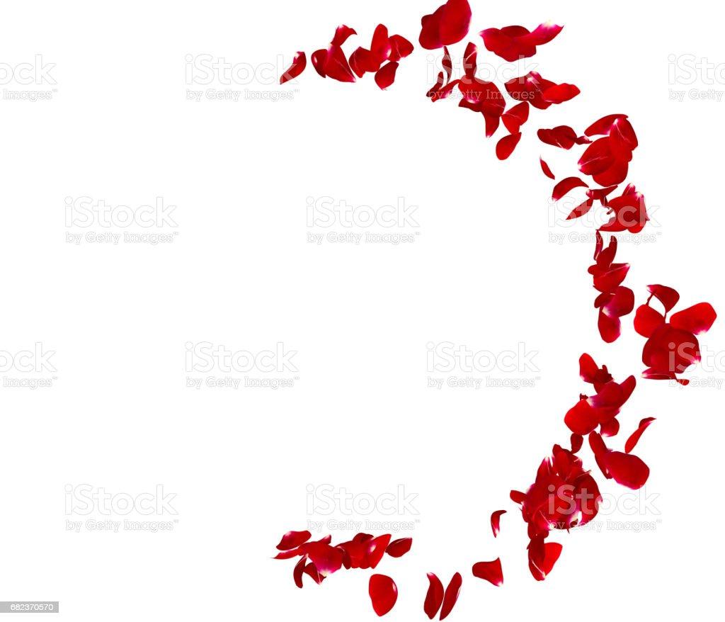 The petals of the dark rose is the original story zbiór zdjęć royalty-free
