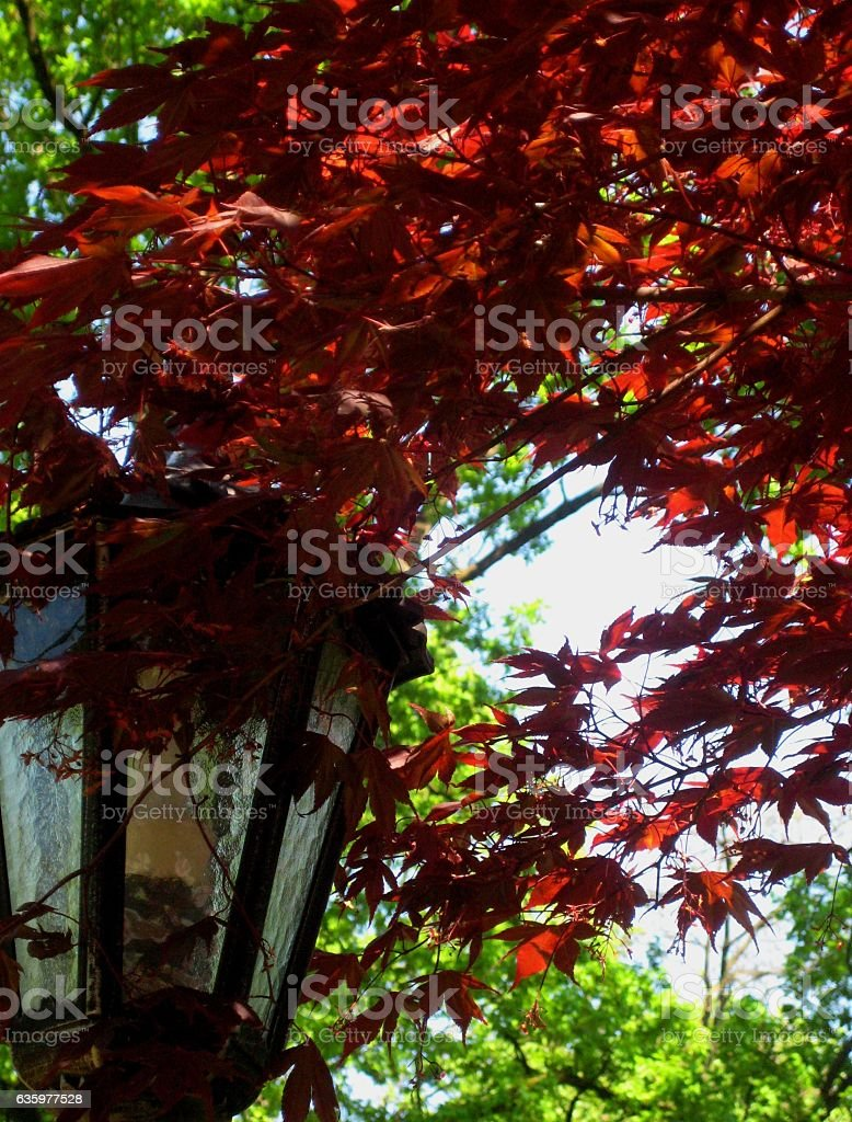 the photo with the bright autumn landscape background stock photo