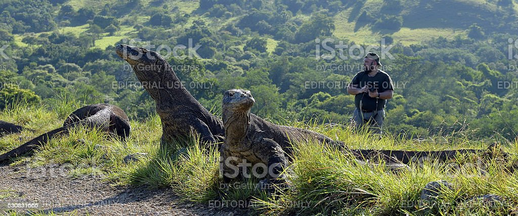 The photographer and Komodo Dragons stock photo