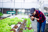 The photographer is happily photographing the salad plots. Photography concept