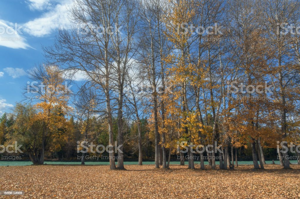 The picturesque autumn forest along the river against a bright blue sky royalty-free stock photo