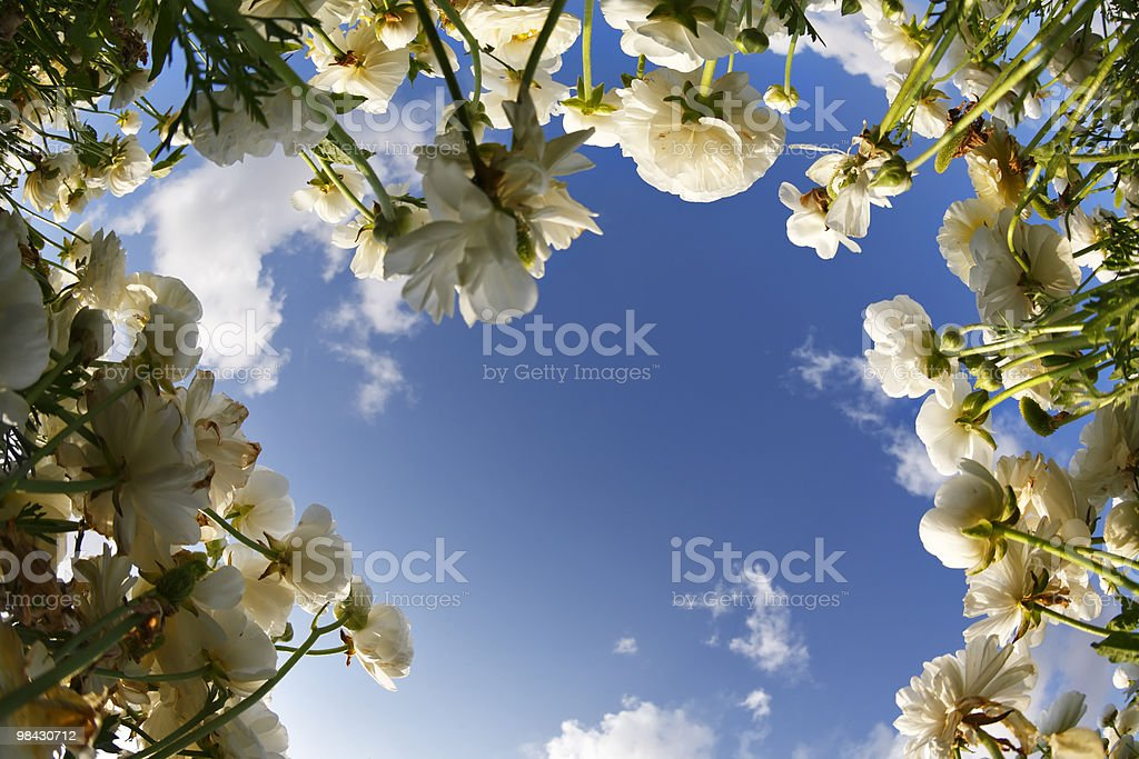 The picturesque flower field royalty-free stock photo