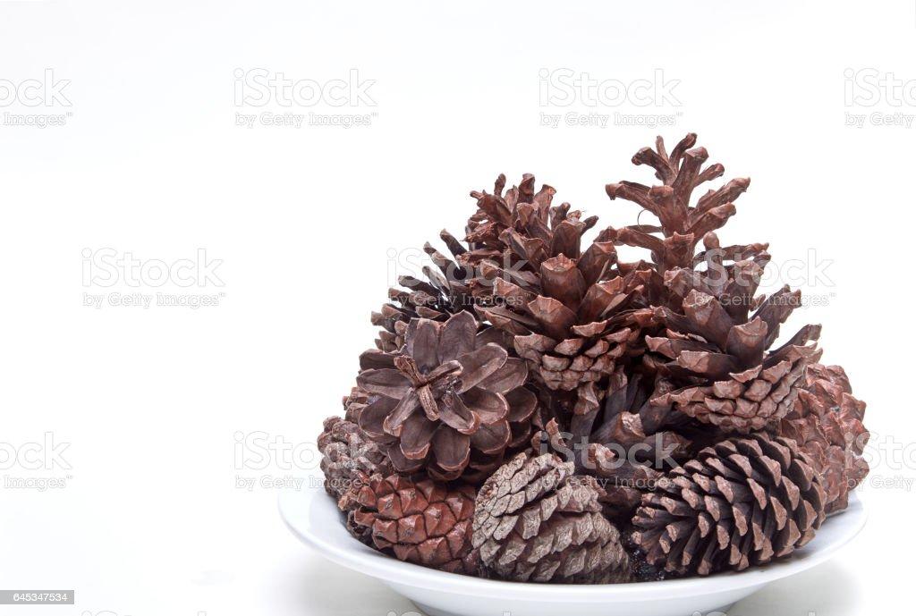 The Pine cone stock photo