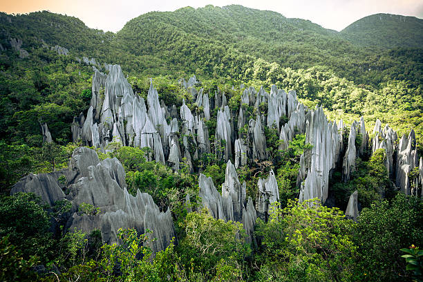 The Pinnacles Rock Formation at Gunung Mulu National Park Rock pinnacles in the jungle island of borneo stock pictures, royalty-free photos & images