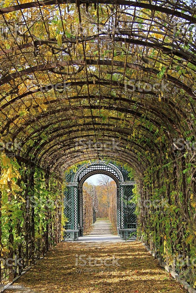 The plant corridor in park of Vienna stock photo