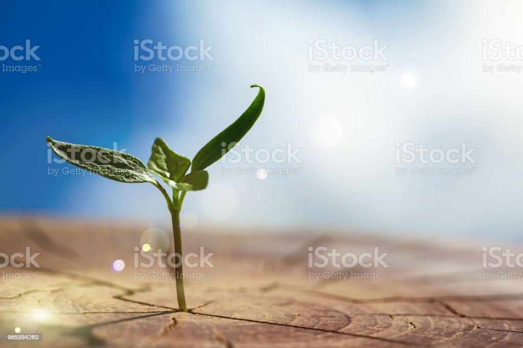 나무에서 자 랍니다 공장 - 로열티 프리 0명 스톡 사진