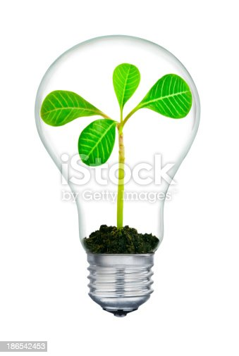The plant inside  light-bulb,isolated on white background.