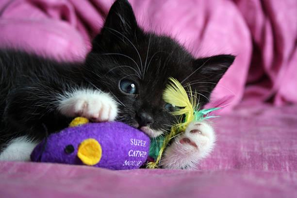 The playing kitten picture id146916665?b=1&k=6&m=146916665&s=612x612&w=0&h=rugohjbrjcbxxdmpnotrf46qheenqvnj4setrryric8=