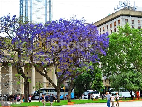 Buenos Aires, Argentina - November 18, 2019. The Plaza de Mayo (May Square), a city square with buildings and jacaranda flowering tree in spring day.People at the Facade of the Buenos Aires Metropolitan Cathedral in Buenos aires city.