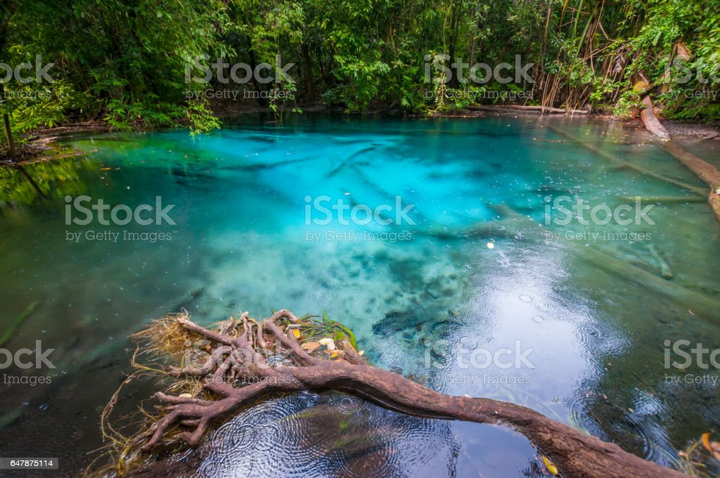 The plenty of forest and water krabi emerald pool National Park, Krabi Province, Thailand stock photo