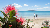 The Pohutukawa tree which is also called the New Zealand Christmas tree in full bloom at Takapuna beach, with blurred Rangitoto Island in the distance and people walking on the beach