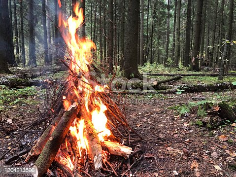 istock The power of fire, the high flame of the campfire in the forest. Thick tree sticks on fire. Evening beautiful bonfire of burning pine in the wild forest. Firewood burns orange flame. Red flame over hot coals of fireplace. 1204213596