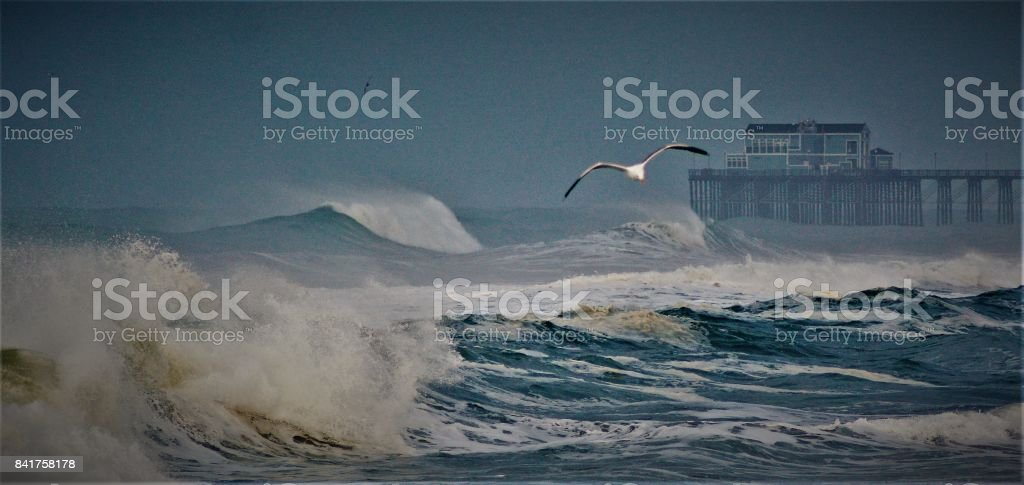 the power of flight stock photo
