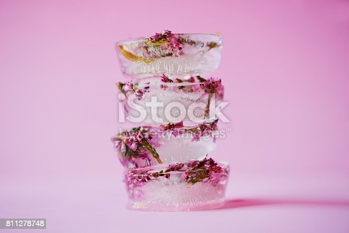 Studio shot of flowers frozen into ice blocks against a pink background