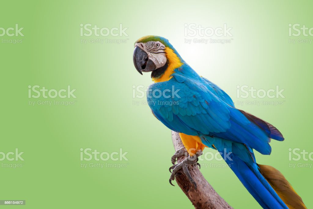The pretty parrot on branch. stock photo