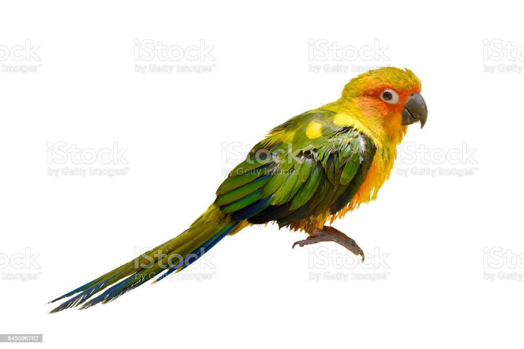 The pretty parrot. stock photo