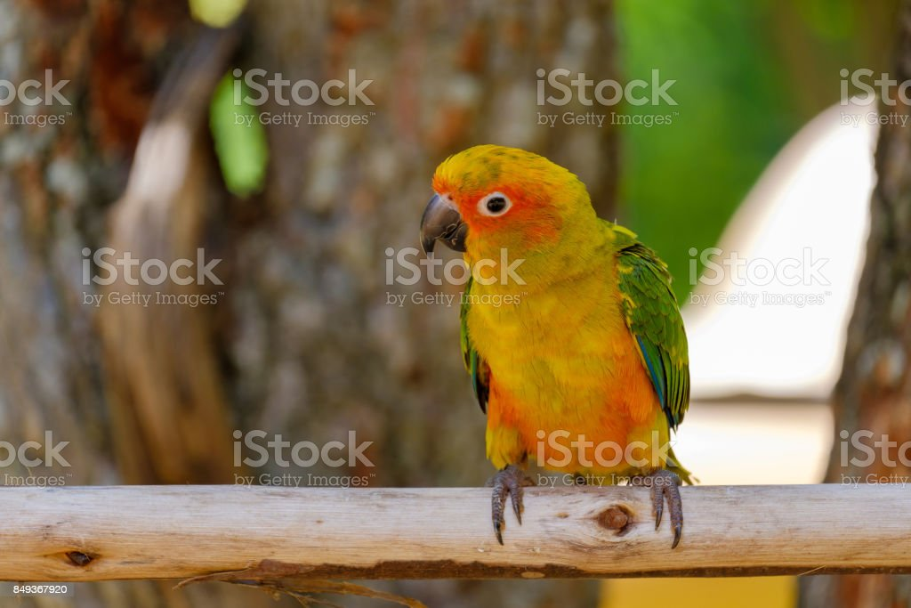 The pretty parrot stock photo