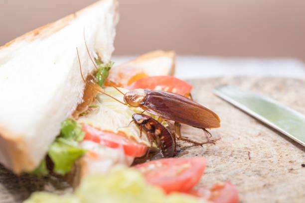problemet i huset på grund av kackerlackor som bor i köket. - coffe with death bildbanksfoton och bilder