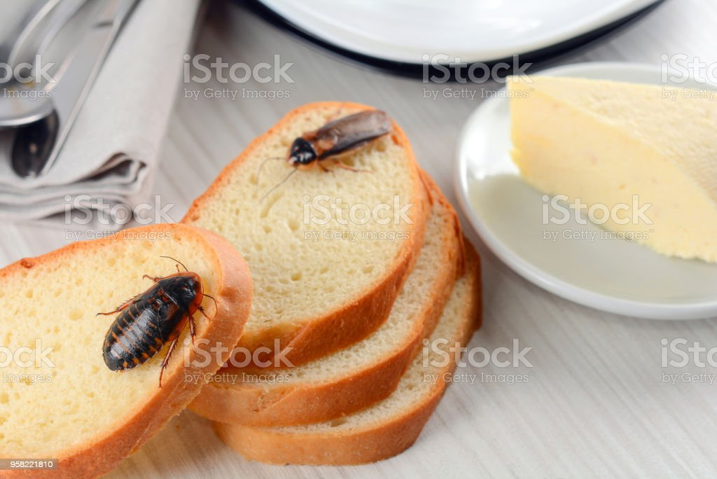 The problem in the house because of cockroaches living in the kitchen - foto stock