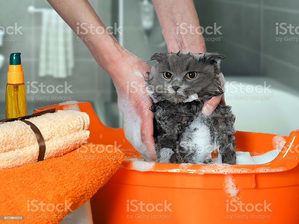 The process of washing the cat стоковое фото