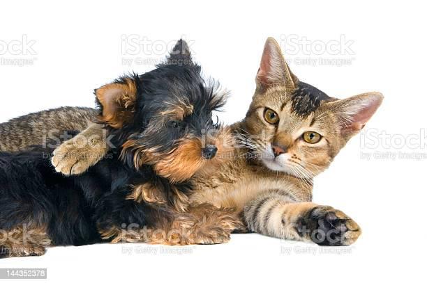 The puppy and kitten picture id144352378?b=1&k=6&m=144352378&s=612x612&h=zl74yqi9jaajaaemvimibvjzuqttdtffrq6plh5ptca=