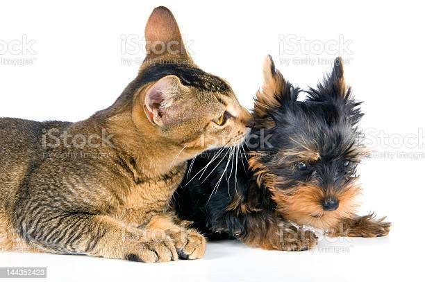 The puppy and kitten picture id144352423?b=1&k=6&m=144352423&s=612x612&h=nbjcvinujbpbi37w crxl4go76vovw4ovnxfy4lzuxw=