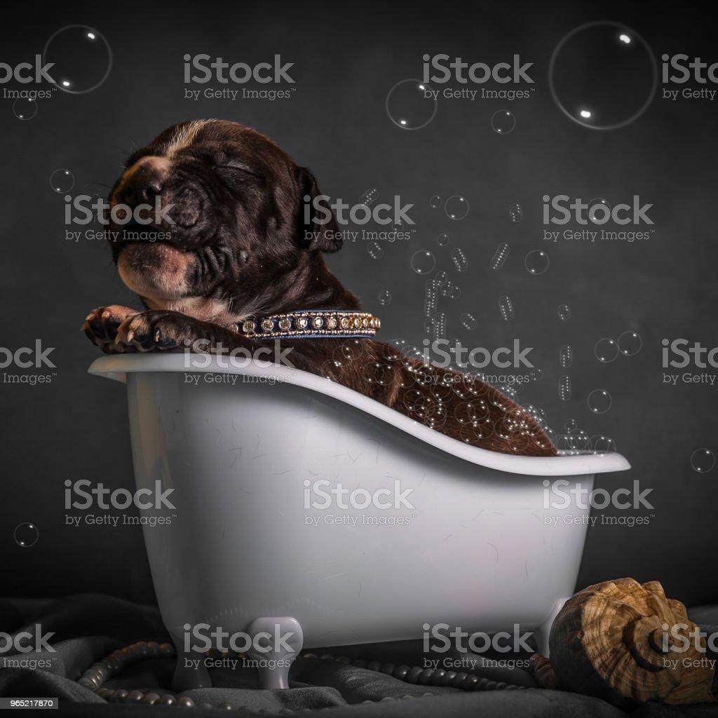 the puppy is bathing in the bathroom zbiór zdjęć royalty-free