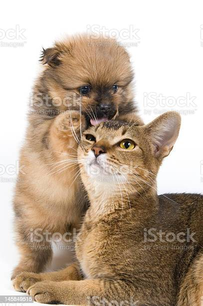 The puppy with a cat picture id145849515?b=1&k=6&m=145849515&s=612x612&h=eog0pvavgb x0dwyfcrb3end ikg5vhiefmmauybv7q=