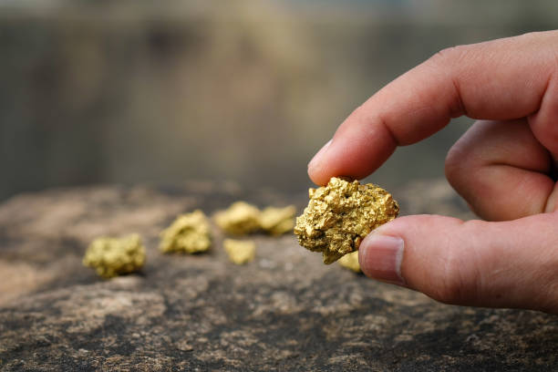 the pure gold ore found in the mine is in the hands of men. - gold mine stock photos and pictures