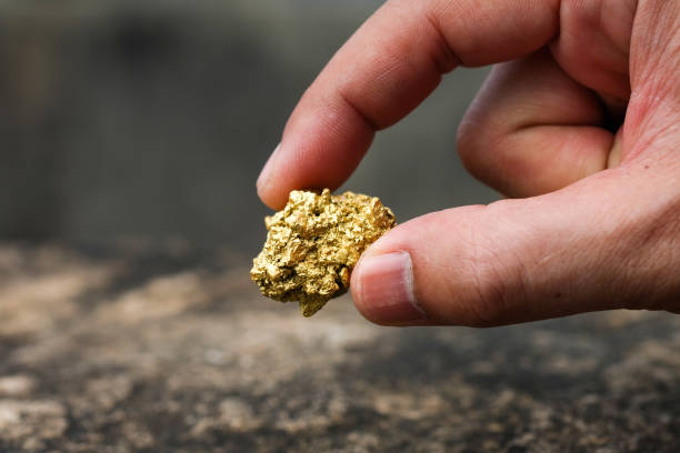 The pure gold ore found in the mine is in the hands of men stock photo