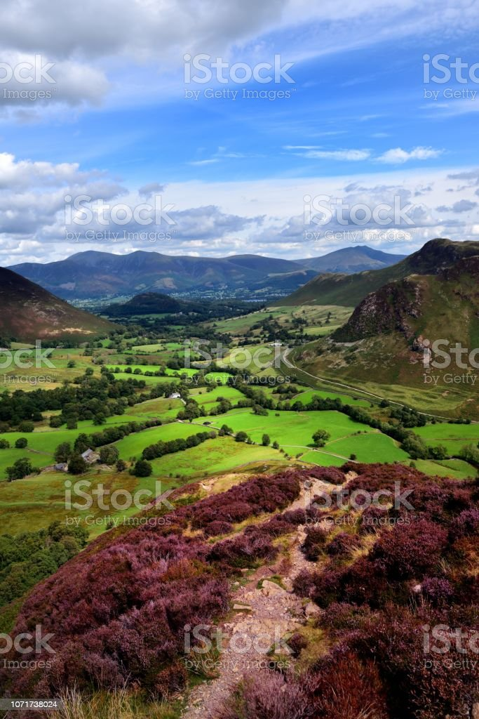 The purple heather of Scope End stock photo