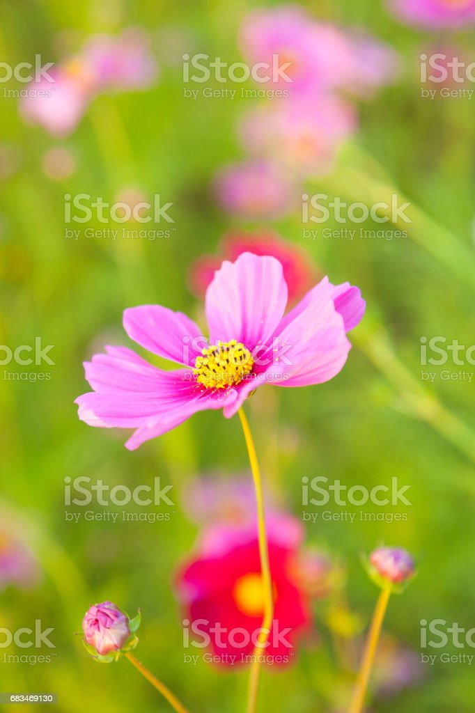 The purple yellow flower stock photo