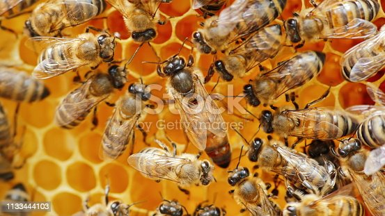 The queen bee surrounded by bees: that support and feed.