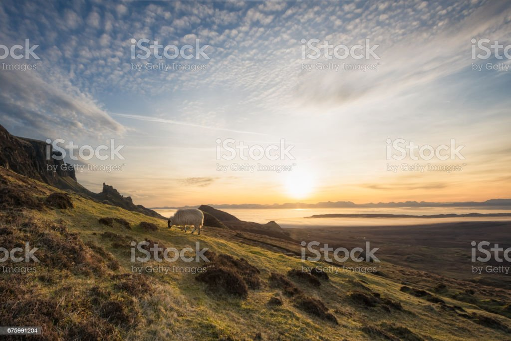 The Quiraing, Isle of Skye, Scotland. The lonely sheep at sunrise stock photo