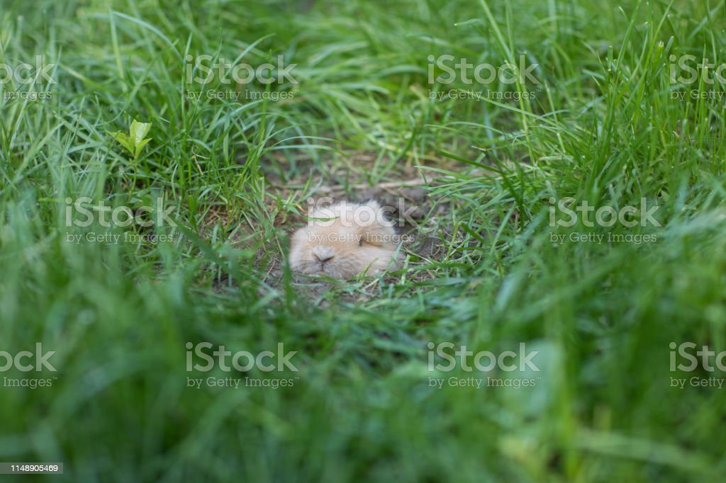 the rabbit is sleeping in a hole