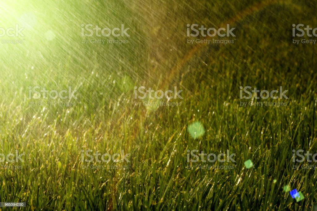 the rain is on the grass royalty-free stock photo