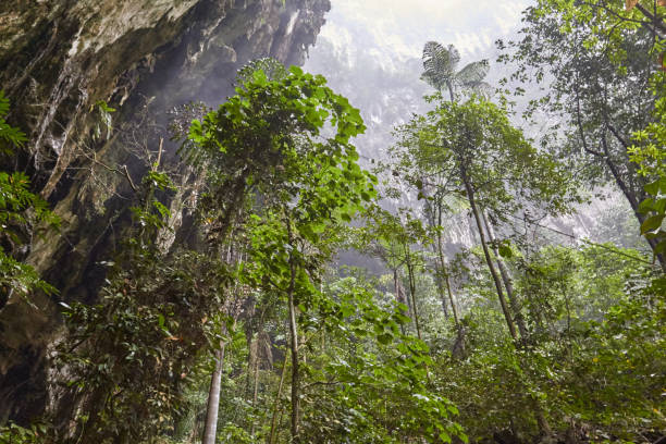The rainforest at Mulu stock photo