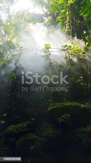 istock the rainforest 1069936396