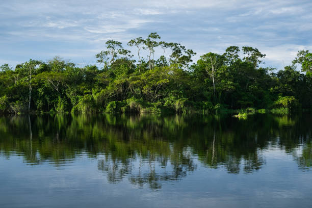The rainforest reflected in the lake The Imiria lake in Peru reflects the lowland rainforest with its abundant vegetation. amazon river stock pictures, royalty-free photos & images