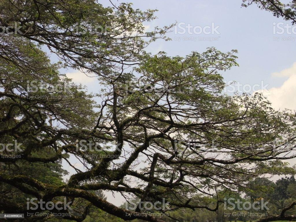 The Raintree stock photo
