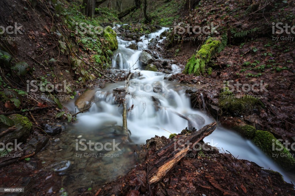 The rapid flow of water in the spring waterfall mountain forest. Stones covered with moss, green fern and fallen leaves on the edge royalty-free stock photo