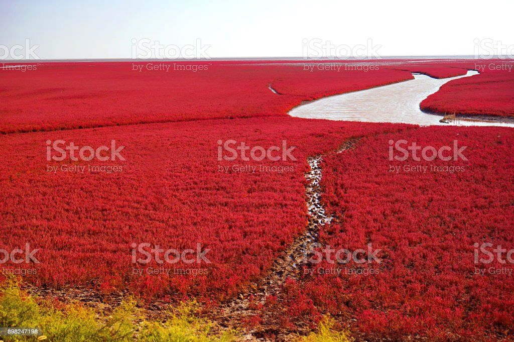 The Red beach is located in Panjin city, Liaoning, China. stock photo