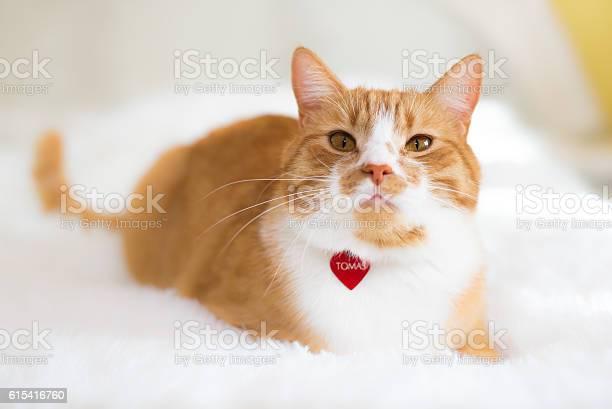 The red cat picture id615416760?b=1&k=6&m=615416760&s=612x612&h=hdq8dazg 0hrzsa mfxyhfxesd59m9vwm2 hcutjxs8=