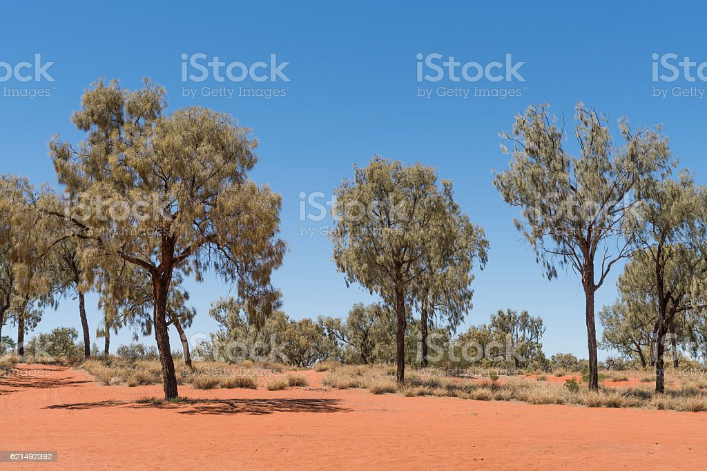 The Red Centre, Australia foto stock royalty-free
