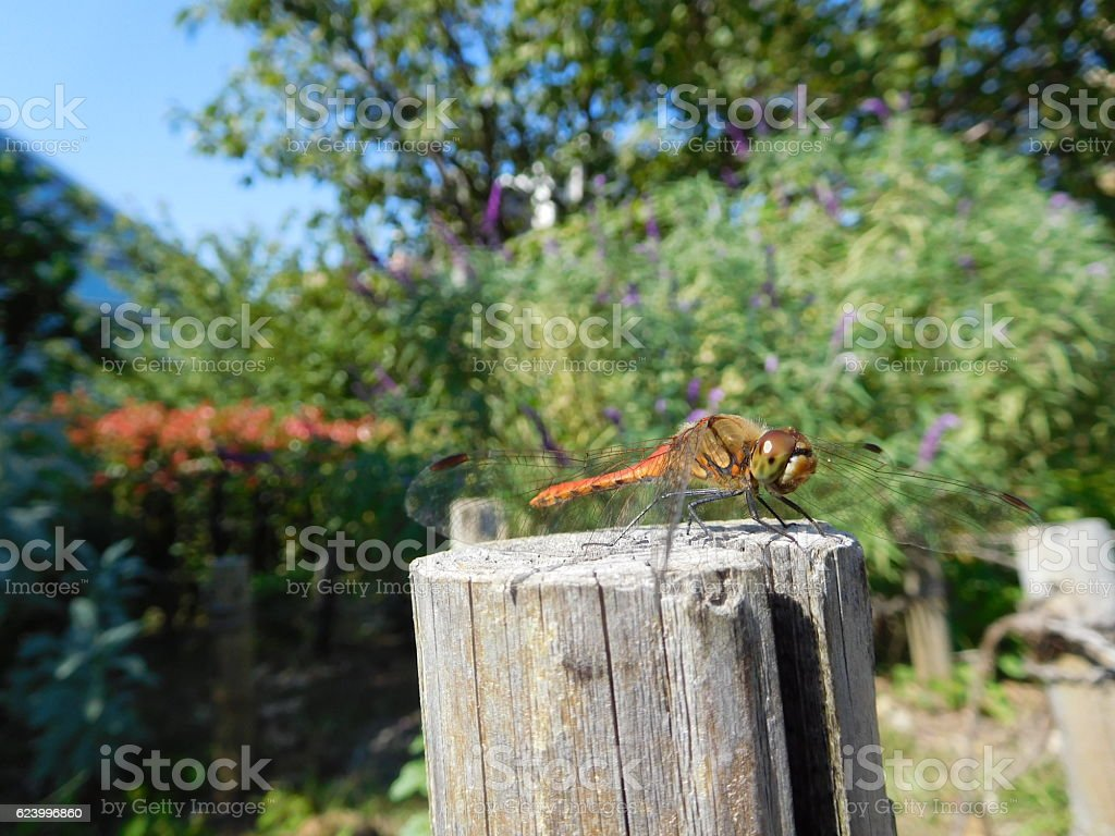 The red dragonfly on the stake under the blue sky stock photo